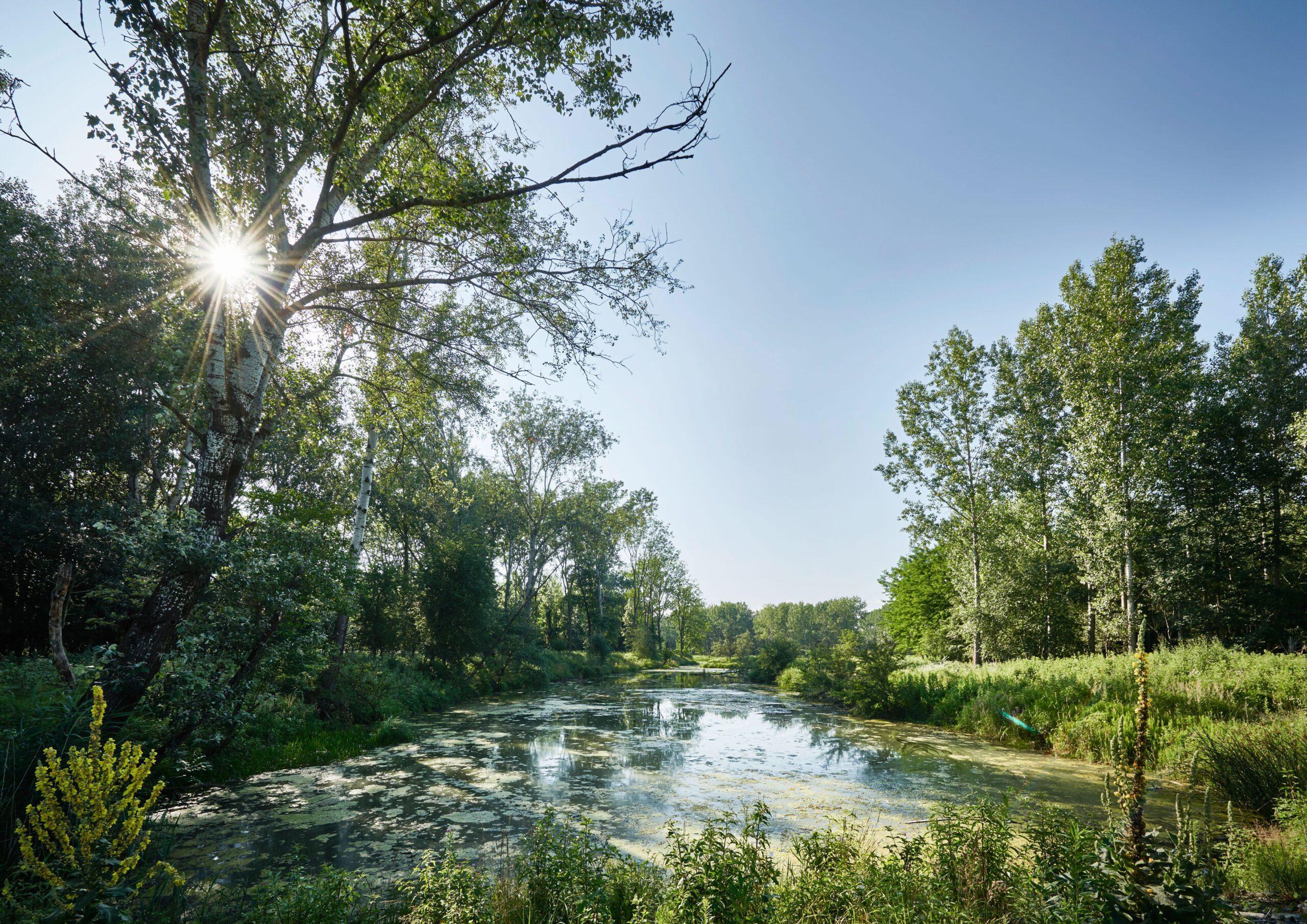 Mehr Natur für unsere Flüsse