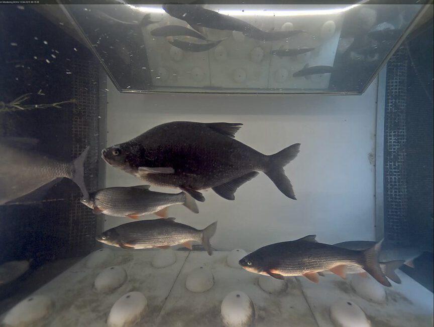 Was ist eine Fischwanderhilfe?