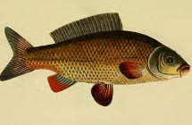 Fischlexikon