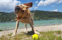 Hund und Wasser © © Teresa Kern/Teresa Kern