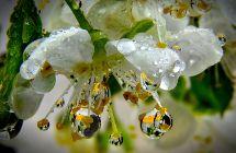 Blüte mit Wasser